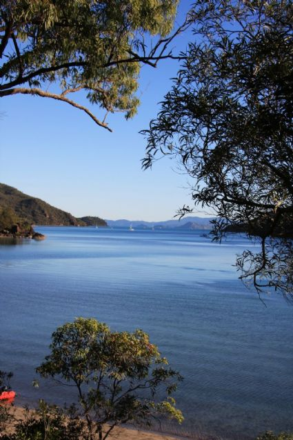 Nara Inlet from Walking Track