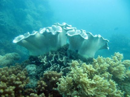 Diving at Dumbell Island