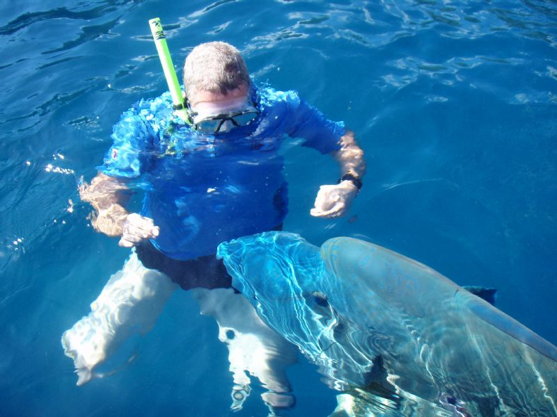 Snorkeling with Mouri Wrasse