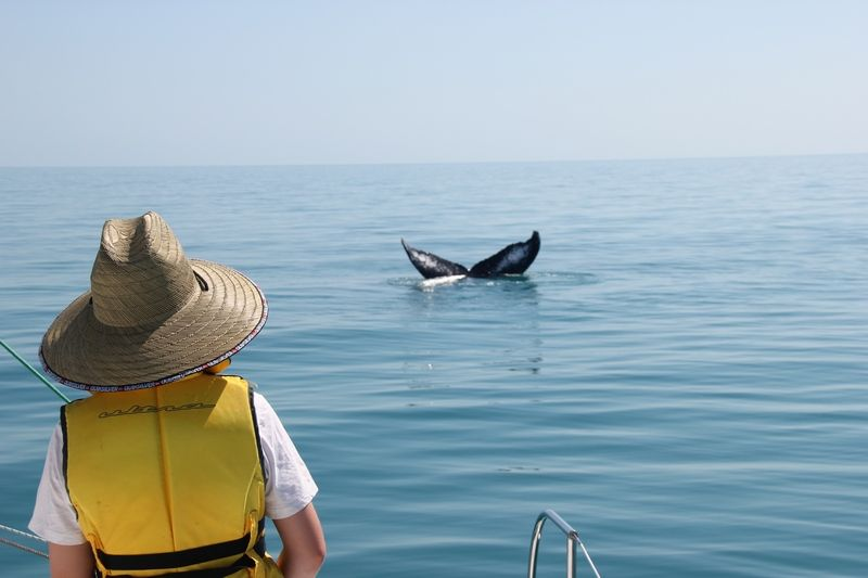 Whale encounter of the amazing kind