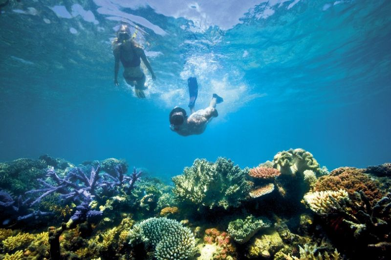 Whitsundays - diving